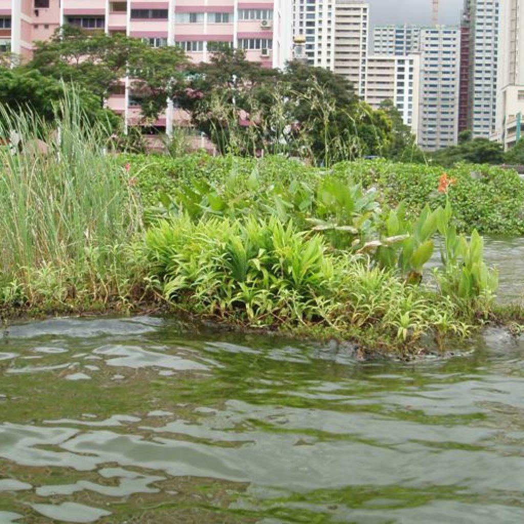 Плавающий остров для пруда своими руками